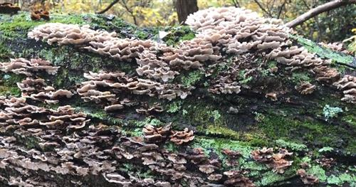 Layers of lichen on tree bark